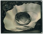 Giant Clam Abalone 2008